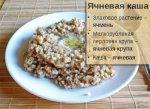 Пшеничная каша польза и вред как варить – Пшеничная каша: польза и вред, калорийность, БЖУ, рецепт приготовления на молоке, воде, с тыквой, мясом