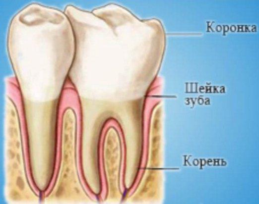 Зачем зубы мудрости человеку – удалять или лечить и что делать при болях, нарушение прикуса и прорезывание восмерок, общие сведения об особенностях анатомического строения и происхождения